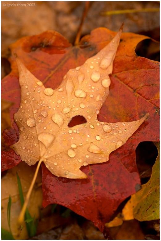 KenhSinhVien.Net-melancholy-autumn.jpg